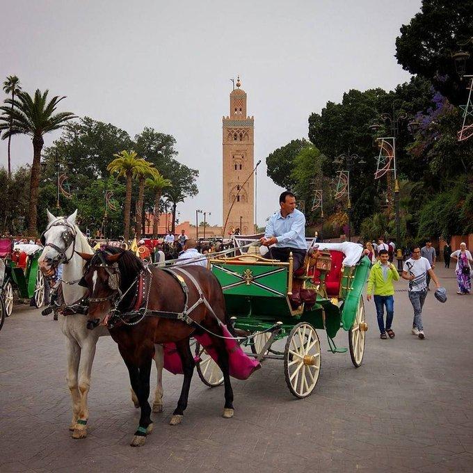 calesas marrakech