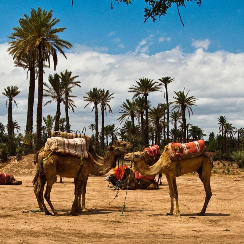 tour palmeral marrakech