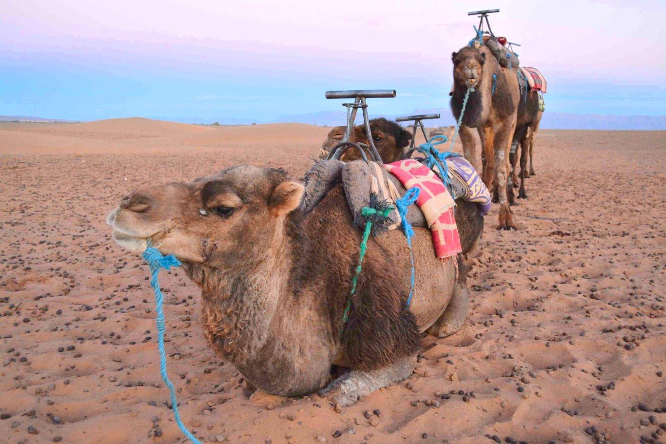 tour por el desierto marrakech